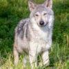 alaska wildlife sanctuary bri