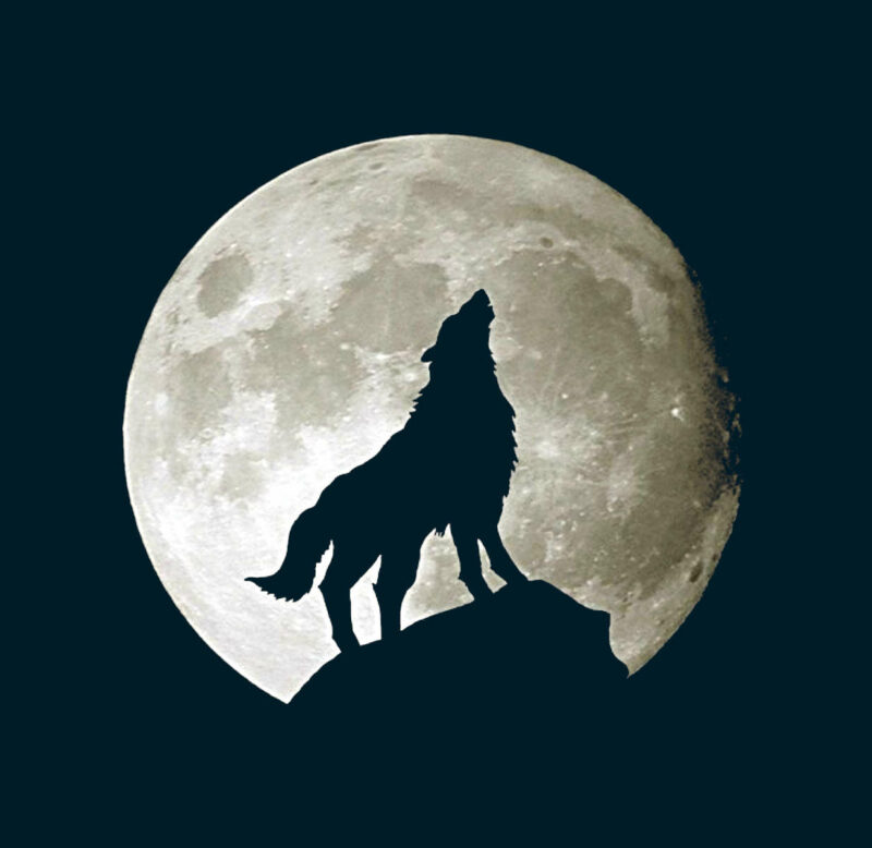 black silhouette of a wolf howling at finely detailed moon